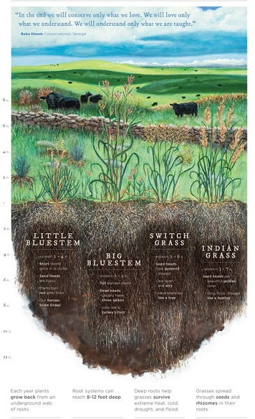 Flint Hills Maps in the Schools Project, Elementary Illustration